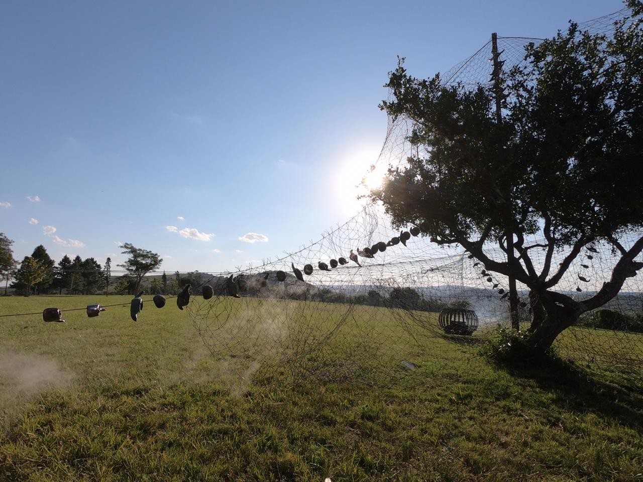 Ash Vertebrates, Uruguay - © Maloles Antignac