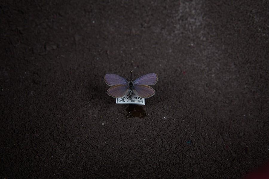 Méthamorphose - © Maloles Antignac